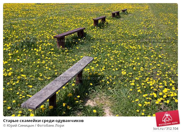 Старые скамейки среди одуванчиков, фото № 312104, снято 18 мая 2008 г. (c) Юрий Синицын / Фотобанк Лори