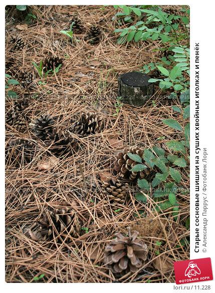 Старые сосновые шишки на суших хвойных иголках и пенёк, фото № 11228, снято 10 сентября 2006 г. (c) Александр Паррус / Фотобанк Лори