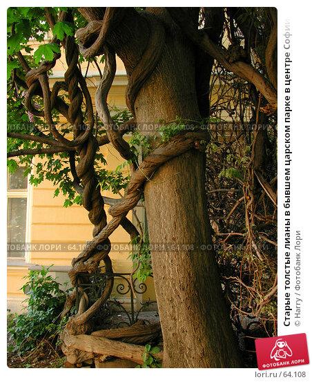 Старые толстые лианы в бывшем царском парке в центре Софии, Болгария, фото № 64108, снято 11 мая 2004 г. (c) Harry / Фотобанк Лори