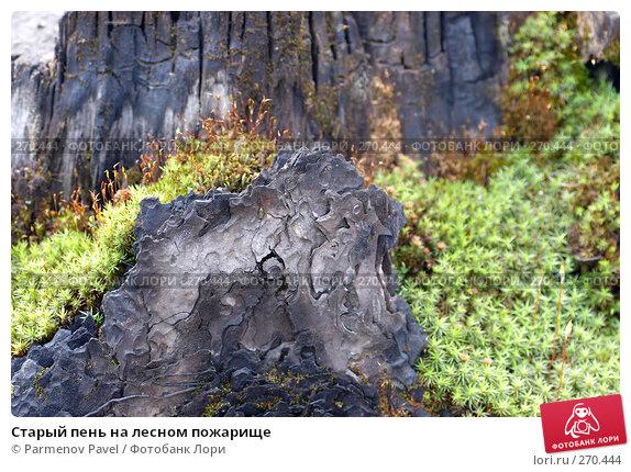 Купить «Старый пень на лесном пожарище», фото № 270444, снято 2 мая 2008 г. (c) Parmenov Pavel / Фотобанк Лори