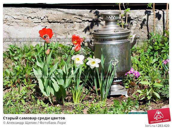 Старый самовар среди цветов, эксклюзивное фото № 283420, снято 11 мая 2008 г. (c) Александр Щепин / Фотобанк Лори