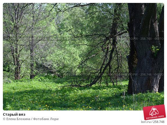 Старый вяз, фото № 258748, снято 20 мая 2007 г. (c) Елена Блохина / Фотобанк Лори