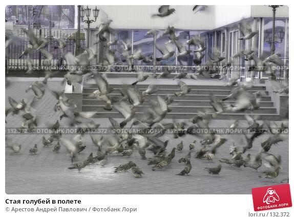 Стая голубей в полете, фото № 132372, снято 5 ноября 2007 г. (c) Арестов Андрей Павлович / Фотобанк Лори