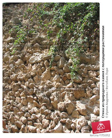 Стена из природного камня с ползущими растениями, фото № 173012, снято 9 августа 2007 г. (c) Ирина Андреева / Фотобанк Лори