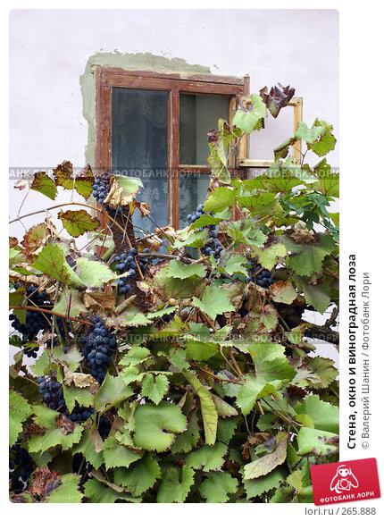 Стена, окно и виноградная лоза, фото № 265888, снято 24 сентября 2007 г. (c) Валерий Шанин / Фотобанк Лори