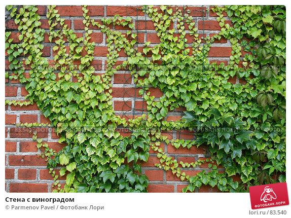 Купить «Стена с виноградом», фото № 83540, снято 3 сентября 2007 г. (c) Parmenov Pavel / Фотобанк Лори