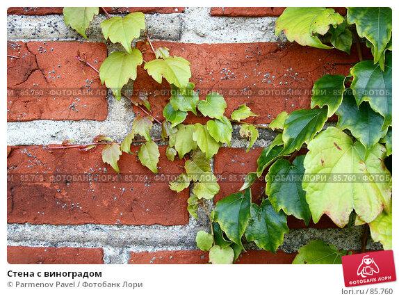 Стена с виноградом, фото № 85760, снято 6 сентября 2007 г. (c) Parmenov Pavel / Фотобанк Лори