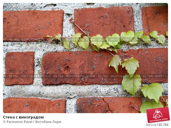 Стена с виноградом, фото № 85784, снято 6 сентября 2007 г. (c) Parmenov Pavel / Фотобанк Лори