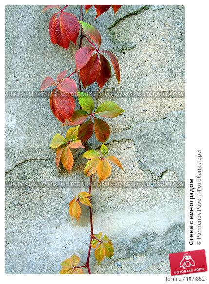 Стена с виноградом, фото № 107852, снято 25 октября 2007 г. (c) Parmenov Pavel / Фотобанк Лори