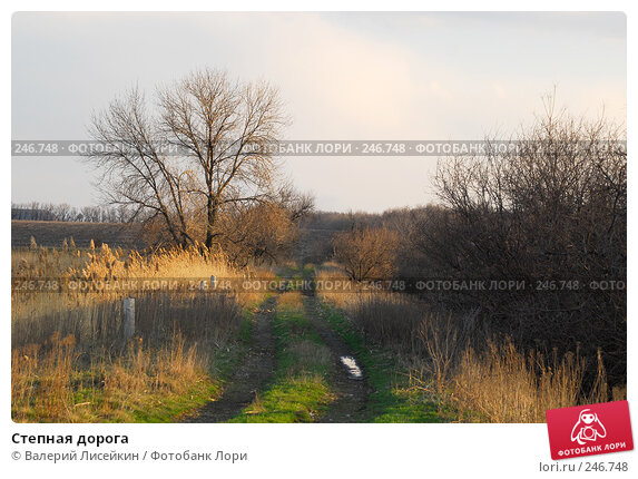 Степная дорога, фото № 246748, снято 27 марта 2008 г. (c) Валерий Лисейкин / Фотобанк Лори