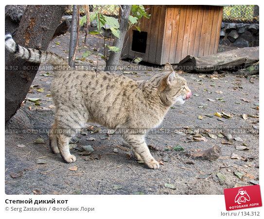 Степной дикий кот, фото № 134312, снято 10 октября 2004 г. (c) Serg Zastavkin / Фотобанк Лори