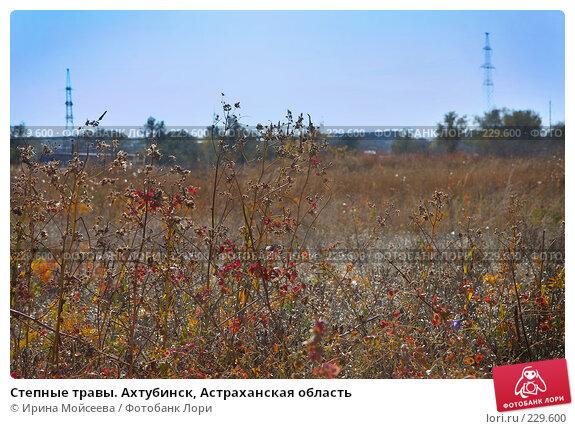 Степные травы. Ахтубинск, Астраханская область, эксклюзивное фото № 229600, снято 20 октября 2007 г. (c) Ирина Мойсеева / Фотобанк Лори