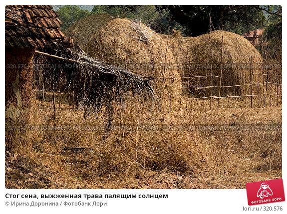 Стог сена, выжженная трава палящим солнцем, фото № 320576, снято 3 января 2008 г. (c) Ирина Доронина / Фотобанк Лори