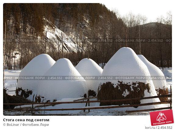 stoga-sena-pod-snegom-0002454552-preview