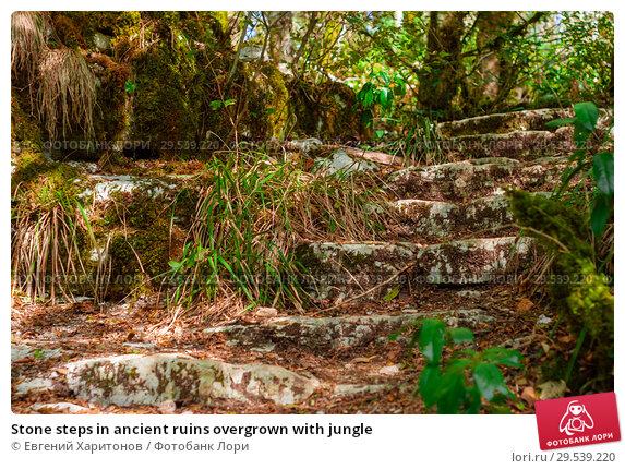 Купить «Stone steps in ancient ruins overgrown with jungle», фото № 29539220, снято 26 сентября 2017 г. (c) Евгений Харитонов / Фотобанк Лори