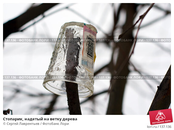 Стопарик, надетый на ветку дерева, фото № 137136, снято 4 декабря 2007 г. (c) Сергей Лаврентьев / Фотобанк Лори