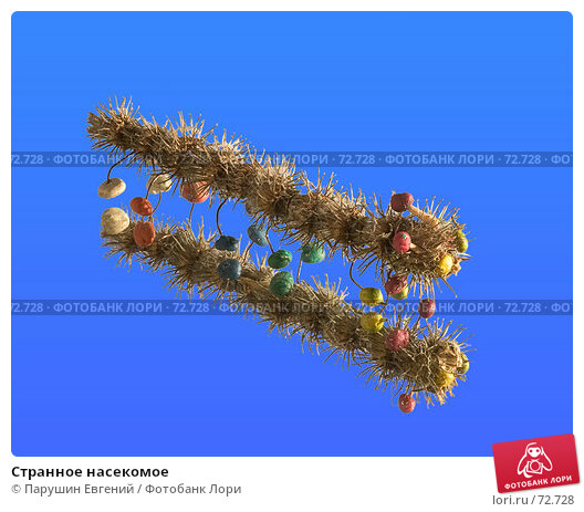 Странное насекомое, фото № 72728, снято 23 января 2017 г. (c) Парушин Евгений / Фотобанк Лори