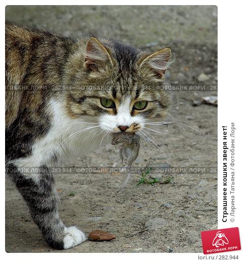 Страшнее кошки зверя нет!, фото № 282944, снято 6 мая 2008 г. (c) Ларина Татьяна / Фотобанк Лори