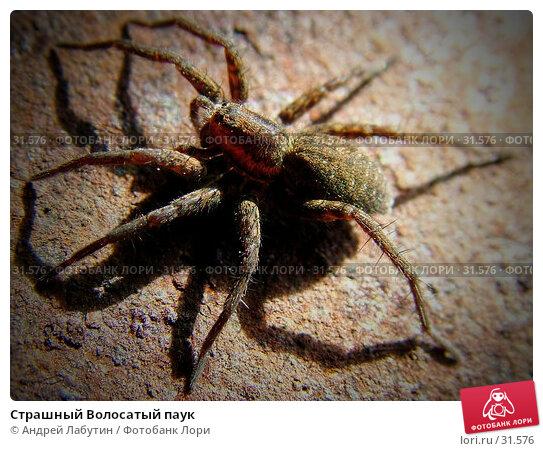 Страшный Волосатый паук, фото № 31576, снято 16 апреля 2006 г. (c) Андрей Лабутин / Фотобанк Лори