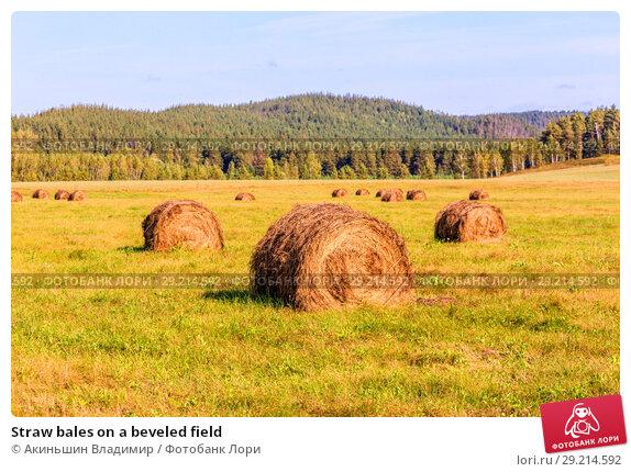 Купить «Straw bales on a beveled field», фото № 29214592, снято 8 сентября 2017 г. (c) Акиньшин Владимир / Фотобанк Лори