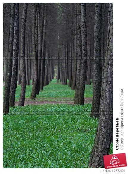 Строй деревьев, фото № 267404, снято 27 апреля 2008 г. (c) Смирнова Ирина / Фотобанк Лори
