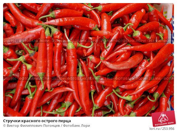 Стручки красного острого перца, фото № 253956, снято 27 сентября 2006 г. (c) Виктор Филиппович Погонцев / Фотобанк Лори