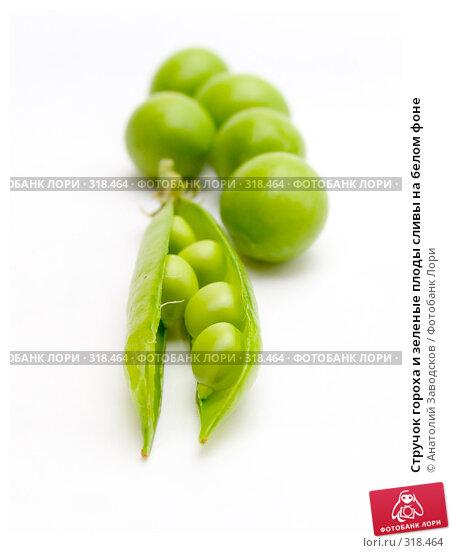 Стручок гороха и зеленые плоды сливы на белом фоне, фото № 318464, снято 29 мая 2006 г. (c) Анатолий Заводсков / Фотобанк Лори