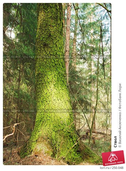 Ствол, фото № 250048, снято 12 апреля 2008 г. (c) Василий Аксюченко / Фотобанк Лори