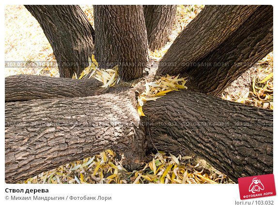 Ствол дерева, фото № 103032, снято 25 октября 2016 г. (c) Михаил Мандрыгин / Фотобанк Лори