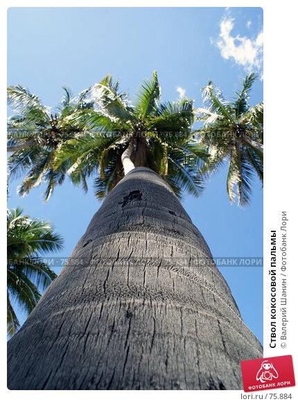 Ствол кокосовой пальмы, фото № 75884, снято 31 мая 2007 г. (c) Валерий Шанин / Фотобанк Лори