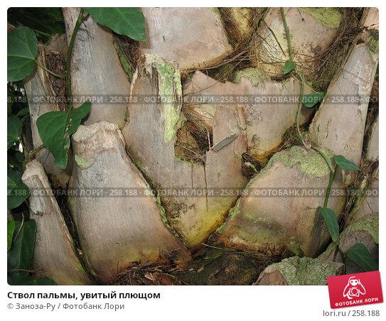 Ствол пальмы, увитый плющом, фото № 258188, снято 12 апреля 2008 г. (c) Заноза-Ру / Фотобанк Лори
