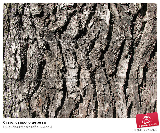 Ствол старого дерева, фото № 254420, снято 12 апреля 2008 г. (c) Заноза-Ру / Фотобанк Лори