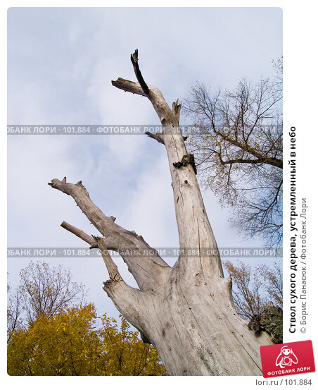 Ствол сухого дерева, устремленный в небо, фото № 101884, снято 29 сентября 2006 г. (c) Борис Панасюк / Фотобанк Лори