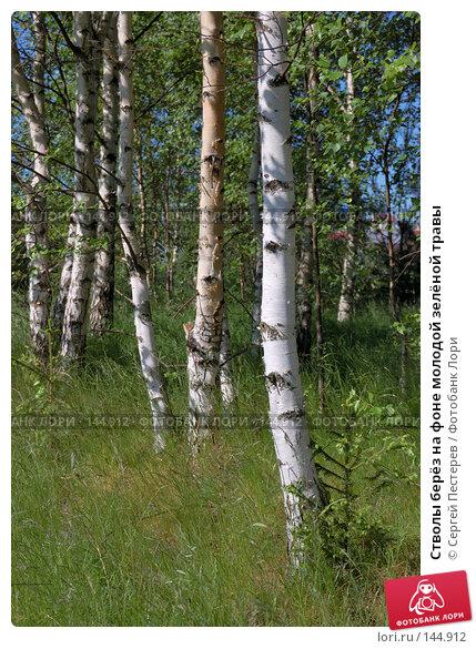 Стволы берёз на фоне молодой зелёной травы, фото № 144912, снято 3 июня 2007 г. (c) Сергей Пестерев / Фотобанк Лори