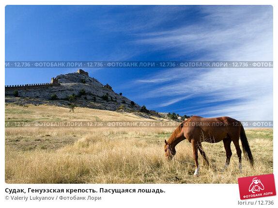 Судак, Генуэзская крепость. Пасущаяся лошадь., фото № 12736, снято 11 сентября 2006 г. (c) Valeriy Lukyanov / Фотобанк Лори