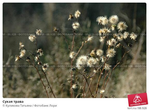 Сухая трава, фото № 88928, снято 5 августа 2005 г. (c) Куликова Татьяна / Фотобанк Лори