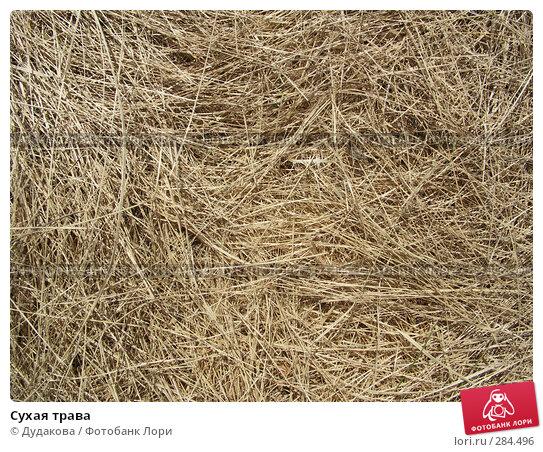 Сухая трава, фото № 284496, снято 13 мая 2008 г. (c) Дудакова / Фотобанк Лори