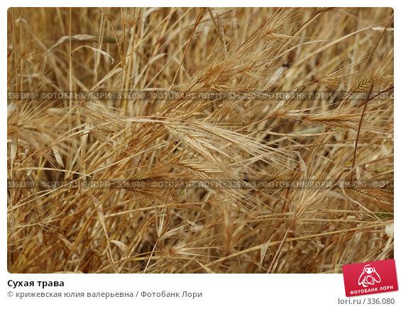 Сухая трава, фото № 336080, снято 15 июня 2008 г. (c) крижевская юлия валерьевна / Фотобанк Лори
