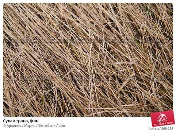 Сухая трава, фон, фото № 269288, снято 2 мая 2008 г. (c) Архипова Мария / Фотобанк Лори
