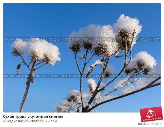 Сухая трава укутанная снегом, фото № 130216, снято 18 декабря 2005 г. (c) Serg Zastavkin / Фотобанк Лори
