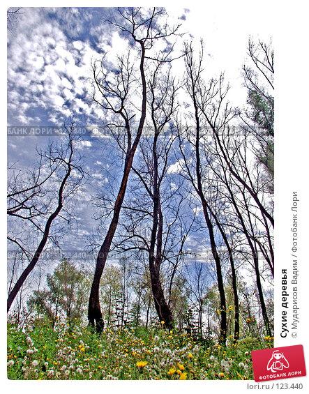 Купить «Сухие деревья», фото № 123440, снято 21 апреля 2018 г. (c) Мударисов Вадим / Фотобанк Лори