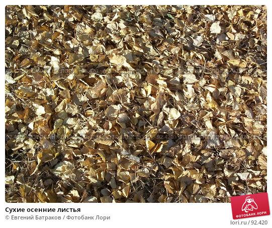 Сухие осенние листья, фото № 92420, снято 10 октября 2005 г. (c) Евгений Батраков / Фотобанк Лори