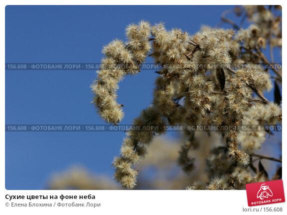 Сухие цветы на фоне неба, фото № 156608, снято 27 марта 2007 г. (c) Елена Блохина / Фотобанк Лори