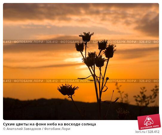 Сухие цветы на фоне неба на восходе солнца, фото № 328412, снято 28 сентября 2005 г. (c) Анатолий Заводсков / Фотобанк Лори