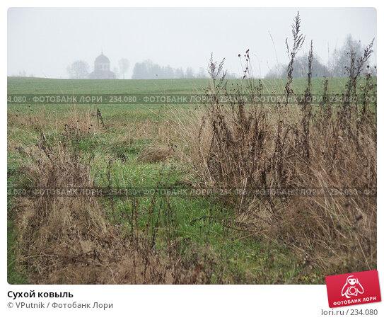 Сухой ковыль, фото № 234080, снято 5 ноября 2004 г. (c) VPutnik / Фотобанк Лори