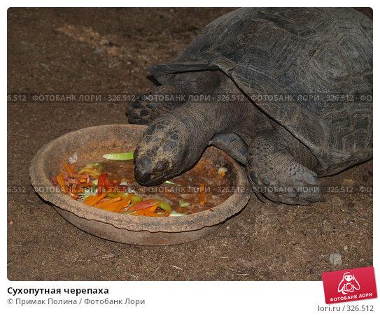 Сухопутная черепаха, фото № 326512, снято 13 августа 2007 г. (c) Примак Полина / Фотобанк Лори