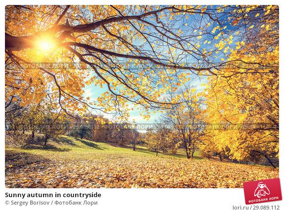 Купить «Sunny autumn in countryside», фото № 29089112, снято 5 октября 2016 г. (c) Sergey Borisov / Фотобанк Лори