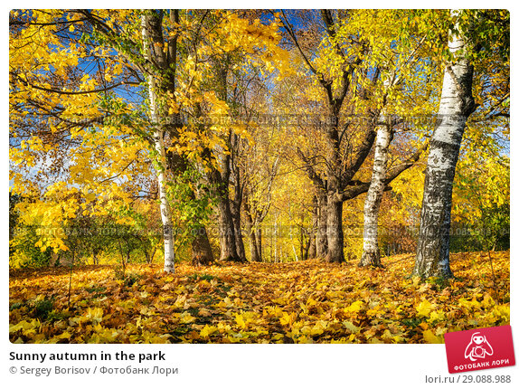 Купить «Sunny autumn in the park», фото № 29088988, снято 4 октября 2016 г. (c) Sergey Borisov / Фотобанк Лори