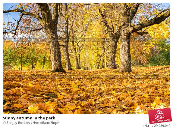 Купить «Sunny autumn in the park», фото № 29089040, снято 4 октября 2016 г. (c) Sergey Borisov / Фотобанк Лори