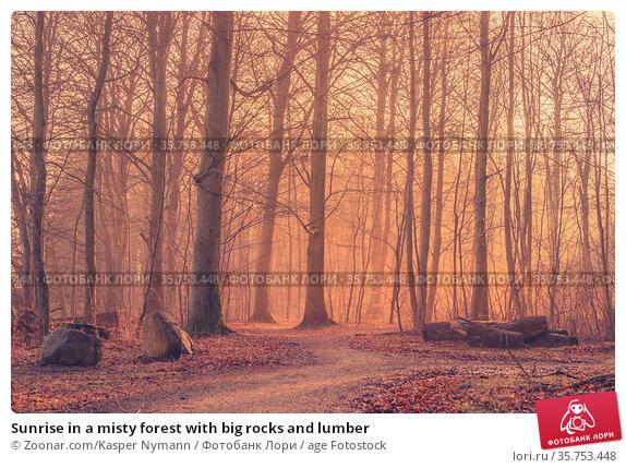 Sunrise in a misty forest with big rocks and lumber. Стоковое фото, фотограф Zoonar.com/Kasper Nymann / age Fotostock / Фотобанк Лори